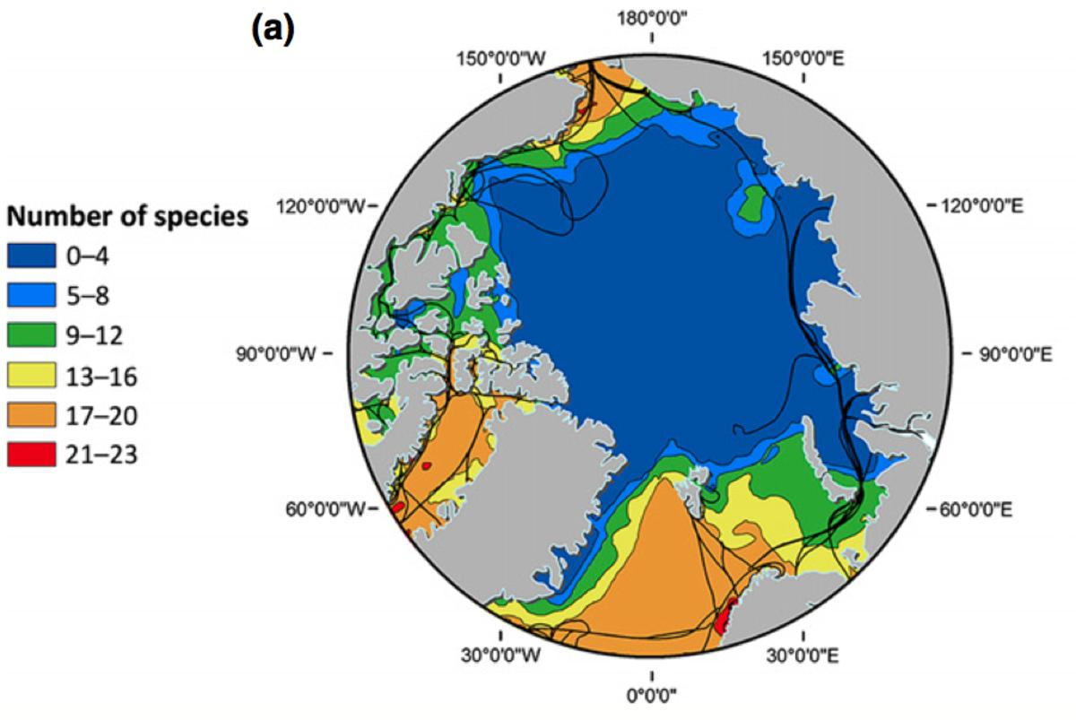 arctic-seabird-richness