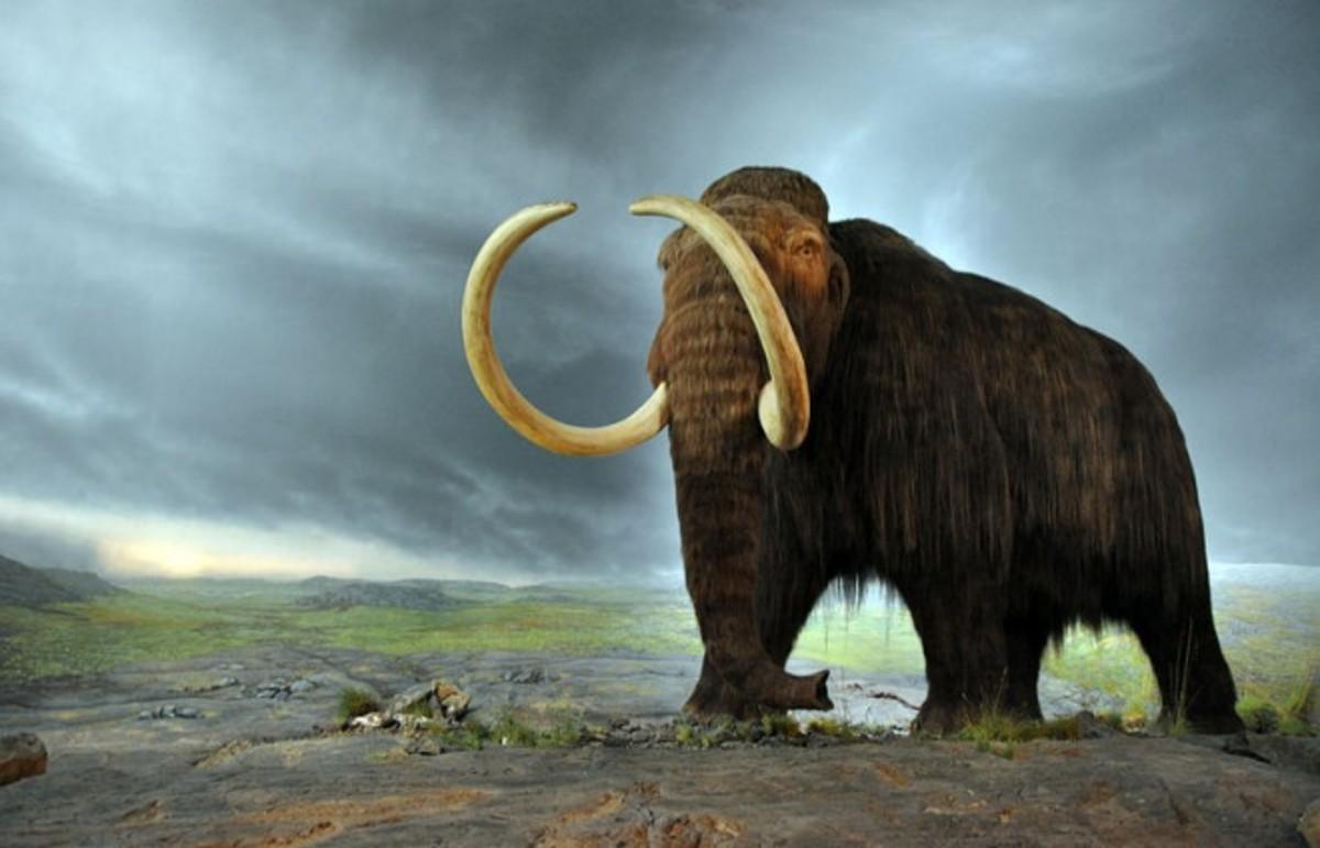 (Photo: Mammut/Wikimedia Commons)