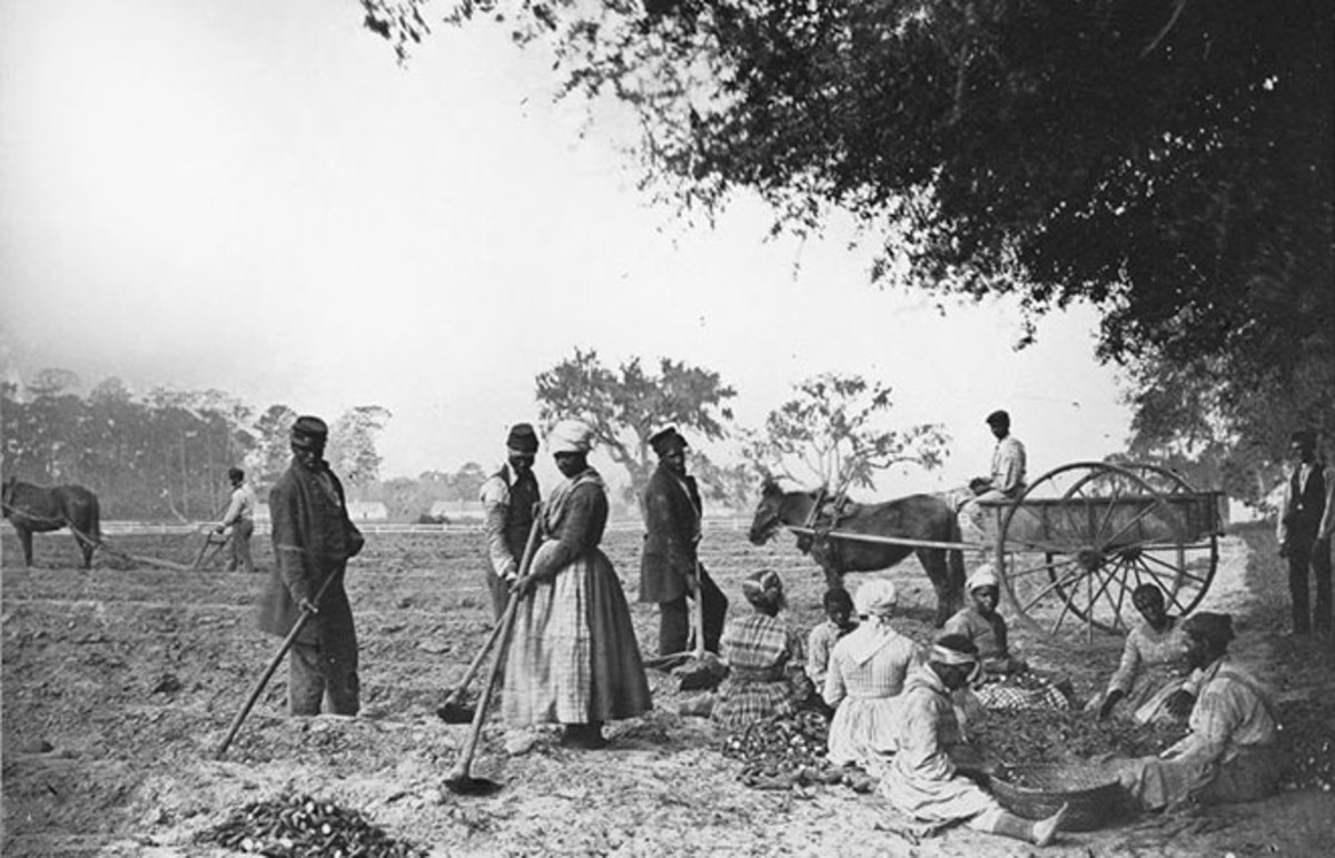 Planting sweet potatoes at John Hopkinson's plantation. (Photo: Library of Congress/Public Domain)