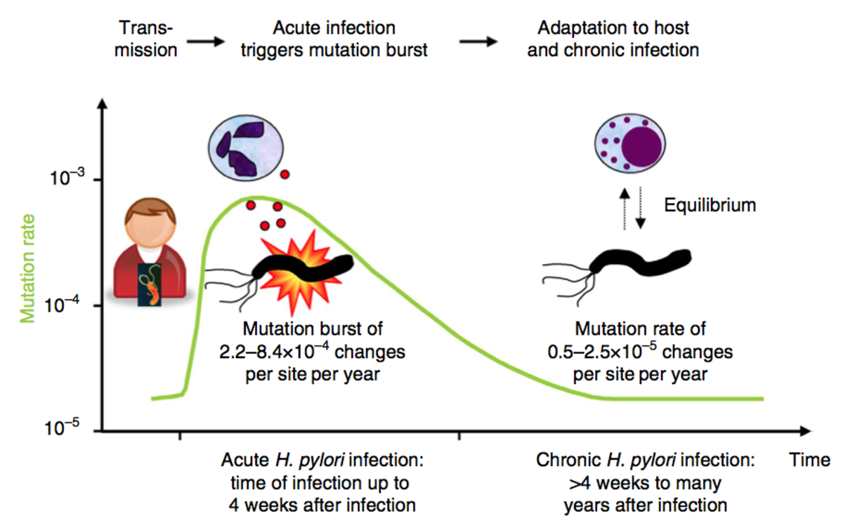 bacteria-mutation