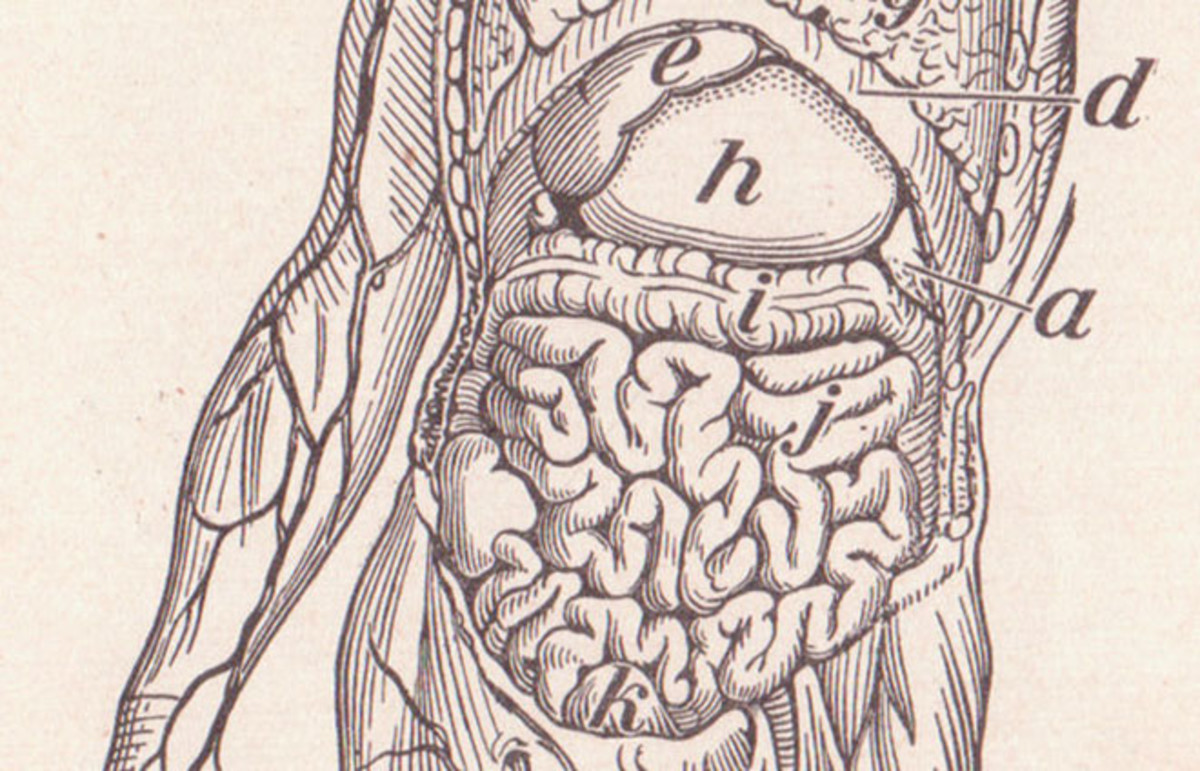 Human viscera from Alvin Davison's The Human Body and Health Revised, 1908. (Photo: Public Domain)