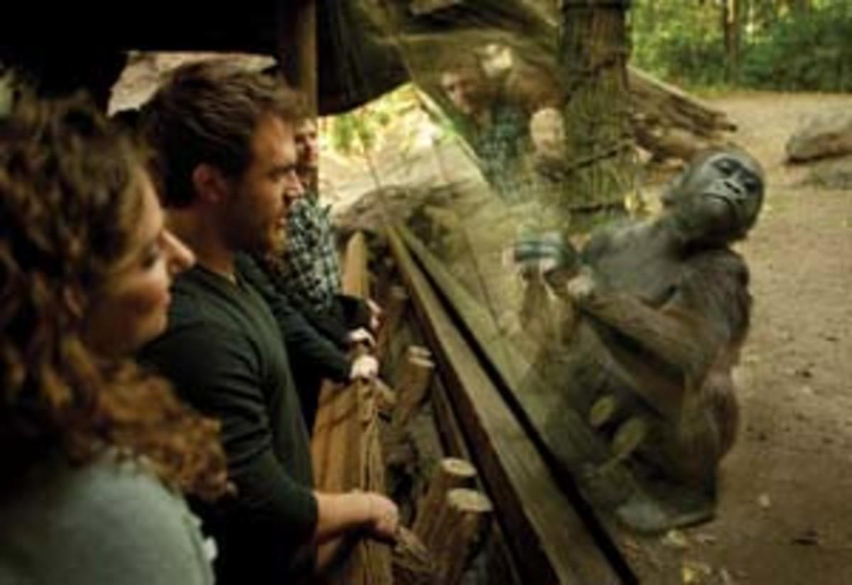 The Congo Gorilla Forest exhibit at the Bronx Zoo. (Bob Sacha)