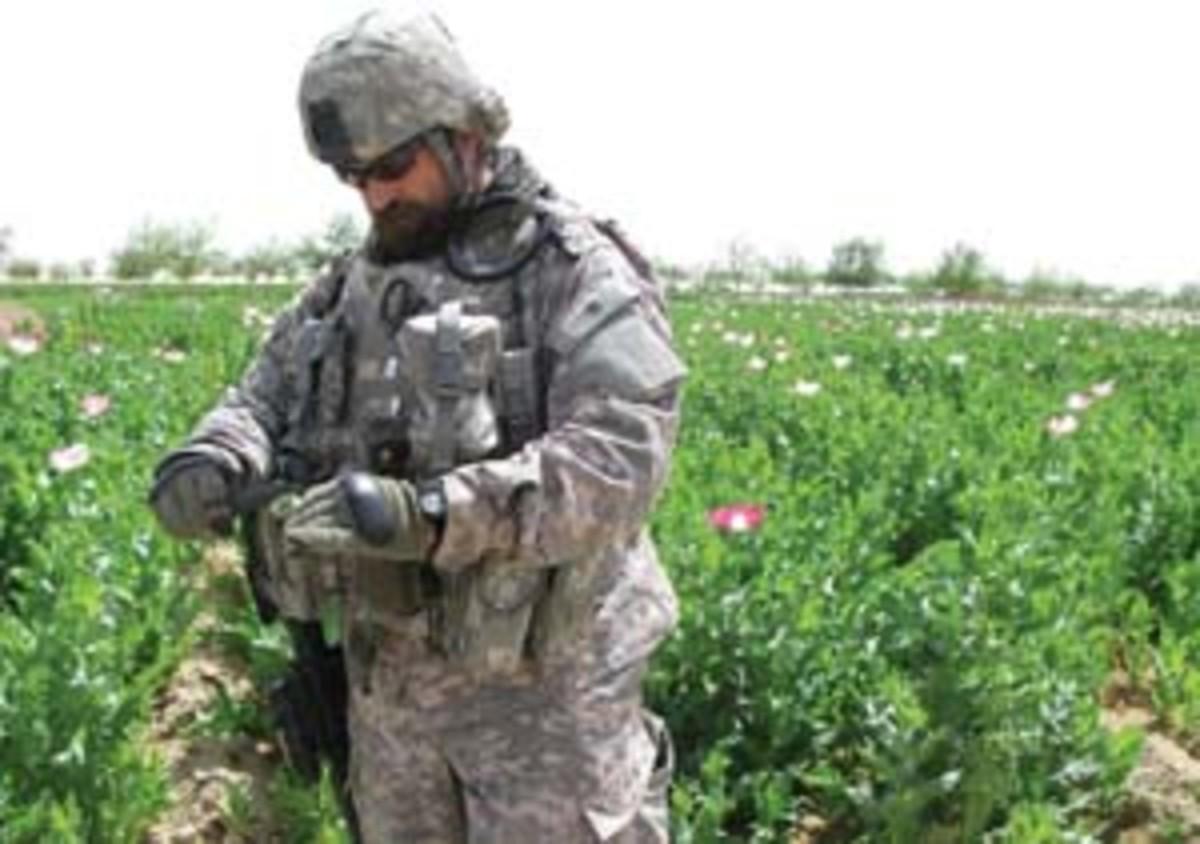 Human Terrain Team member Stephen Lang cuts an opium poppy in Pir Zadeh. (Vanessa M. Gezari)