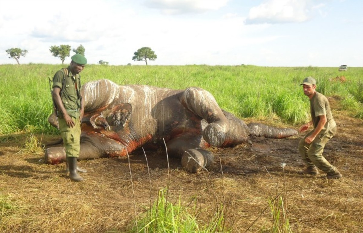 Rangers inspect a poached elephant. (Photo: enoughproject/Flickr)