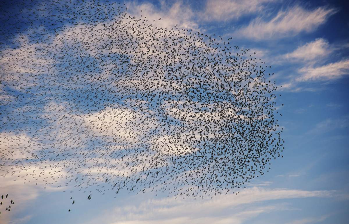 Migration of a different variety. (Photo: Stefano Garau/Shutterstock)