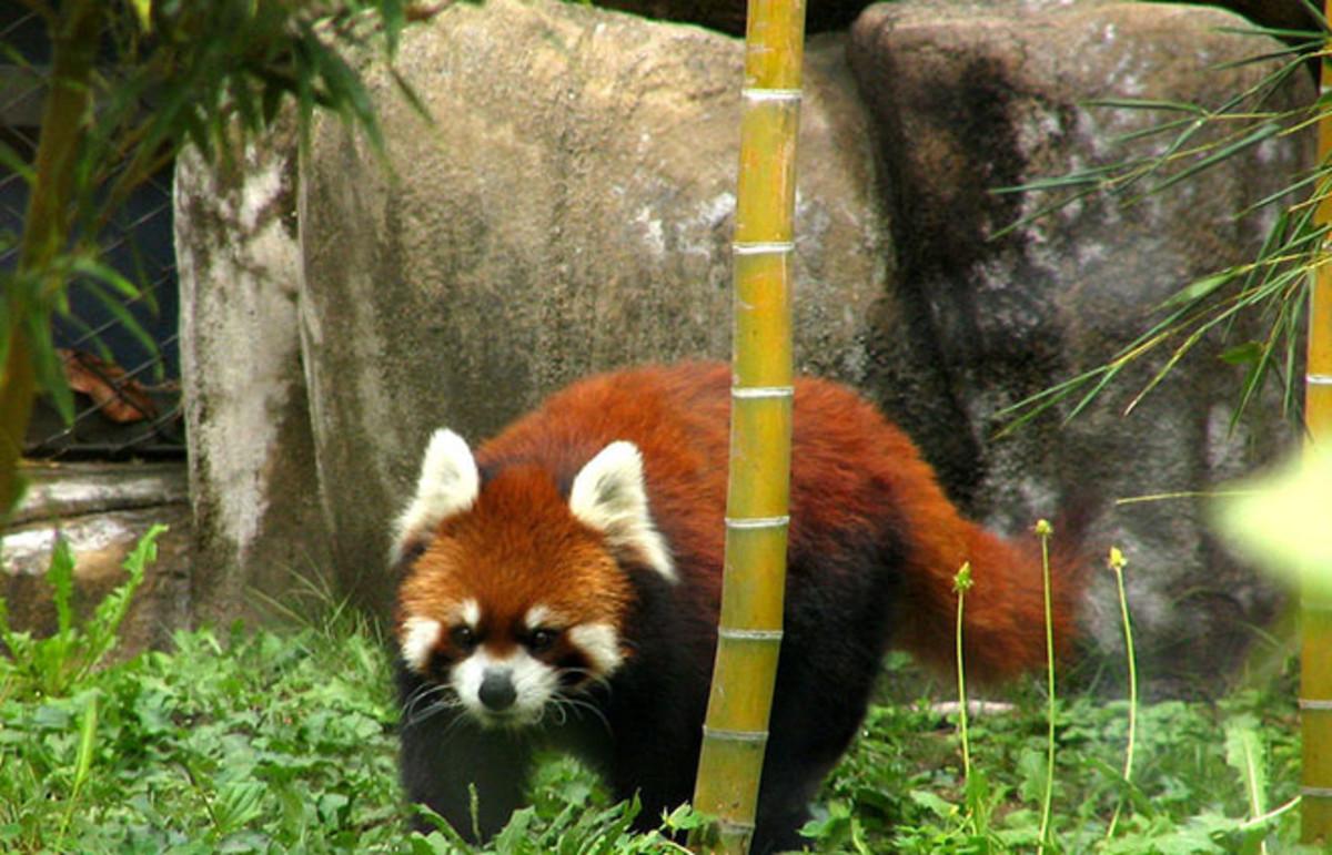 Tennoji Zoo in Osaka, Japan. (Photo: pelican/Flickr)