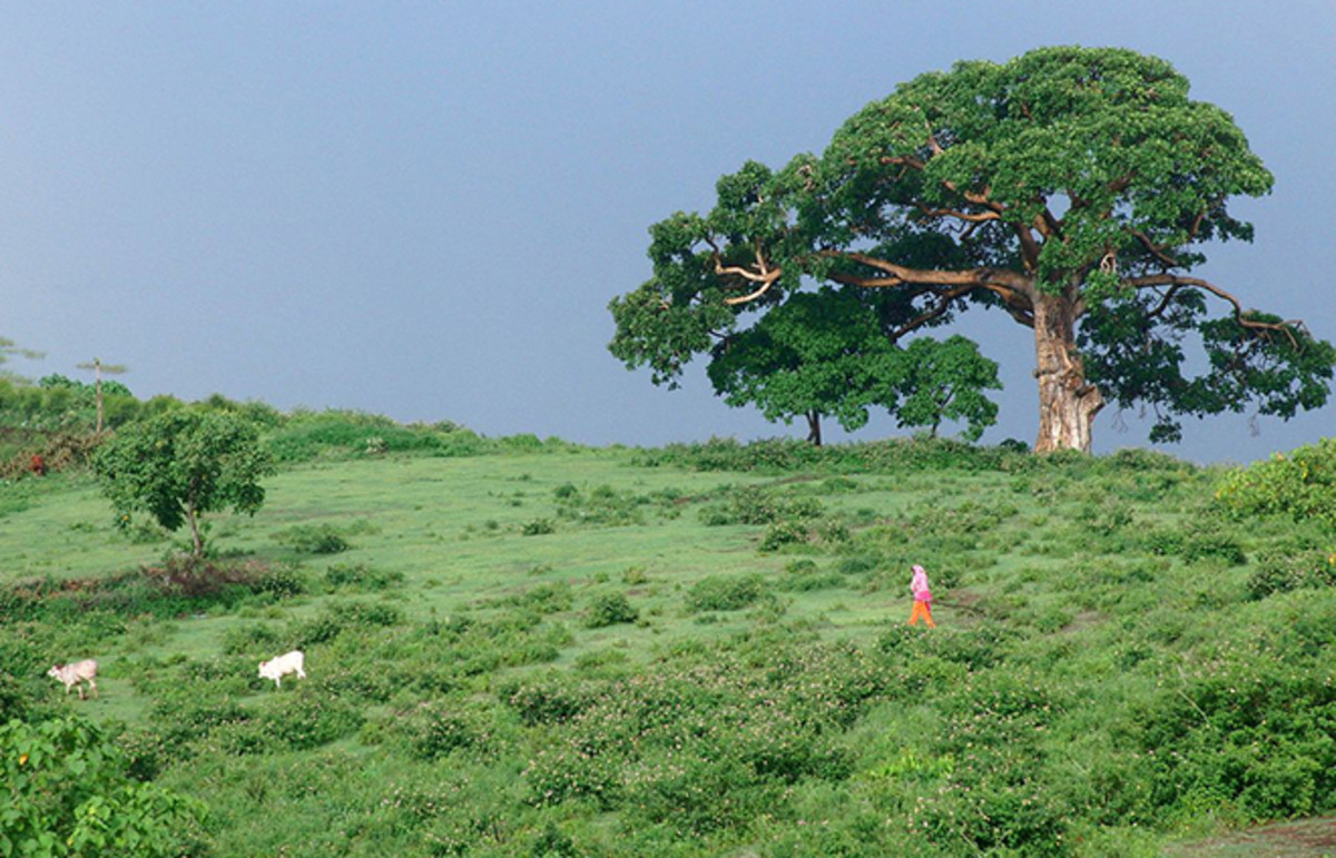 awassa-hill