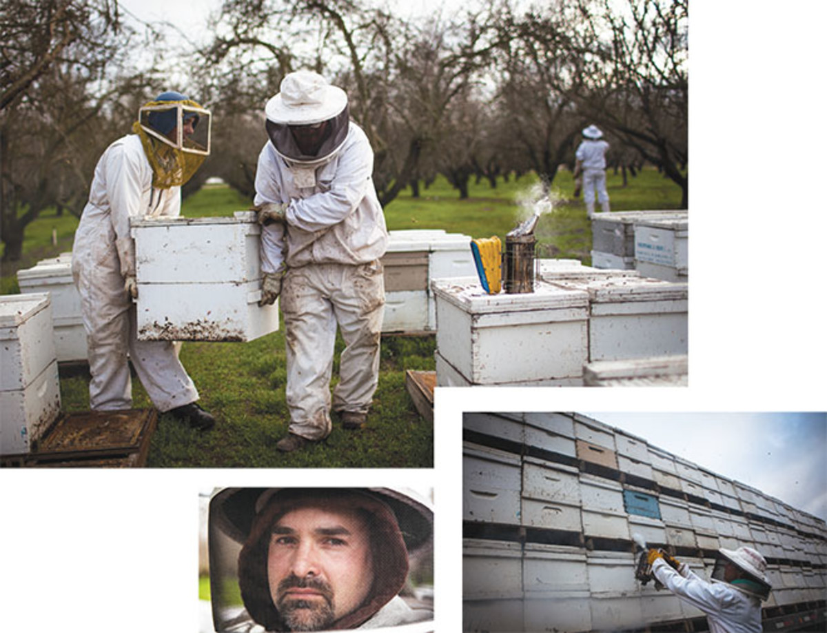 ON THE ROAD: In January, the beekeeper Zac Browning (bottom left) drops his company's hives off in the almond orchards of California—the first stop on an annual cross-country pollination circuit. (Photos: Max Whittaker/Prime)