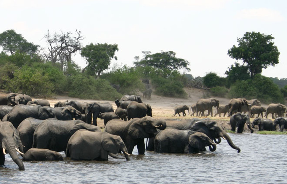 Kavango Zambezi Transfrontier Conservation Area. (Photo: i_pinz/Wikimedia Commons)