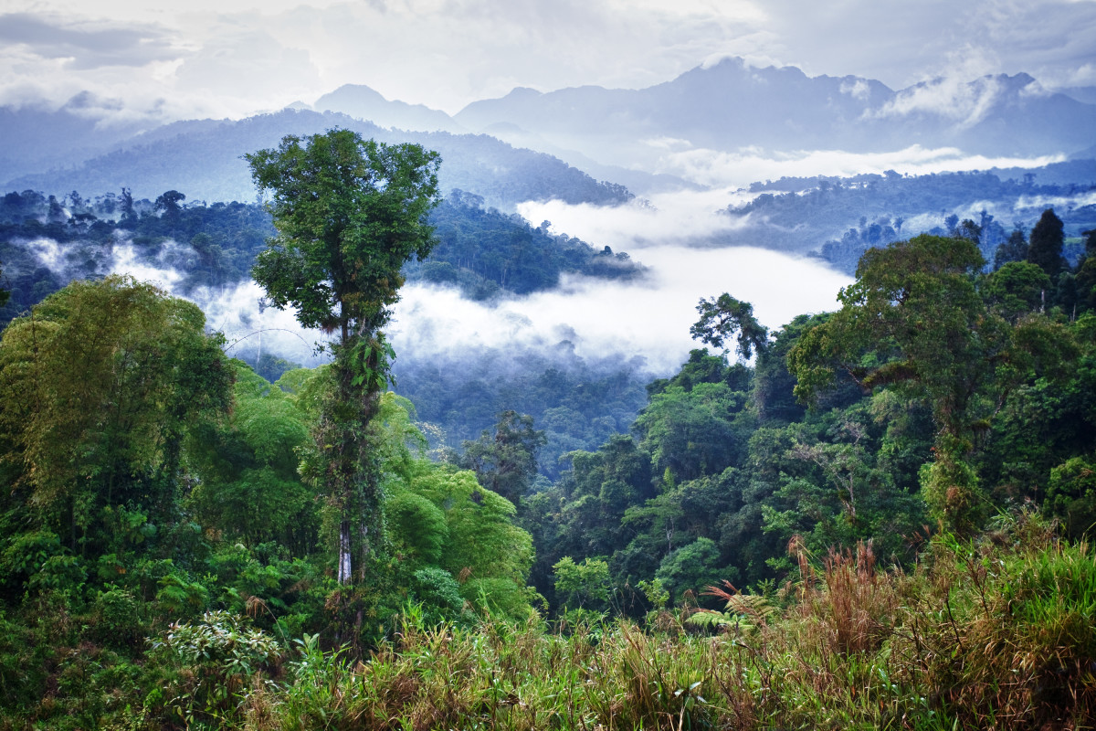 A rainforest in Ecuador. (Photo: Elena Kalistratova/Shutterstock)