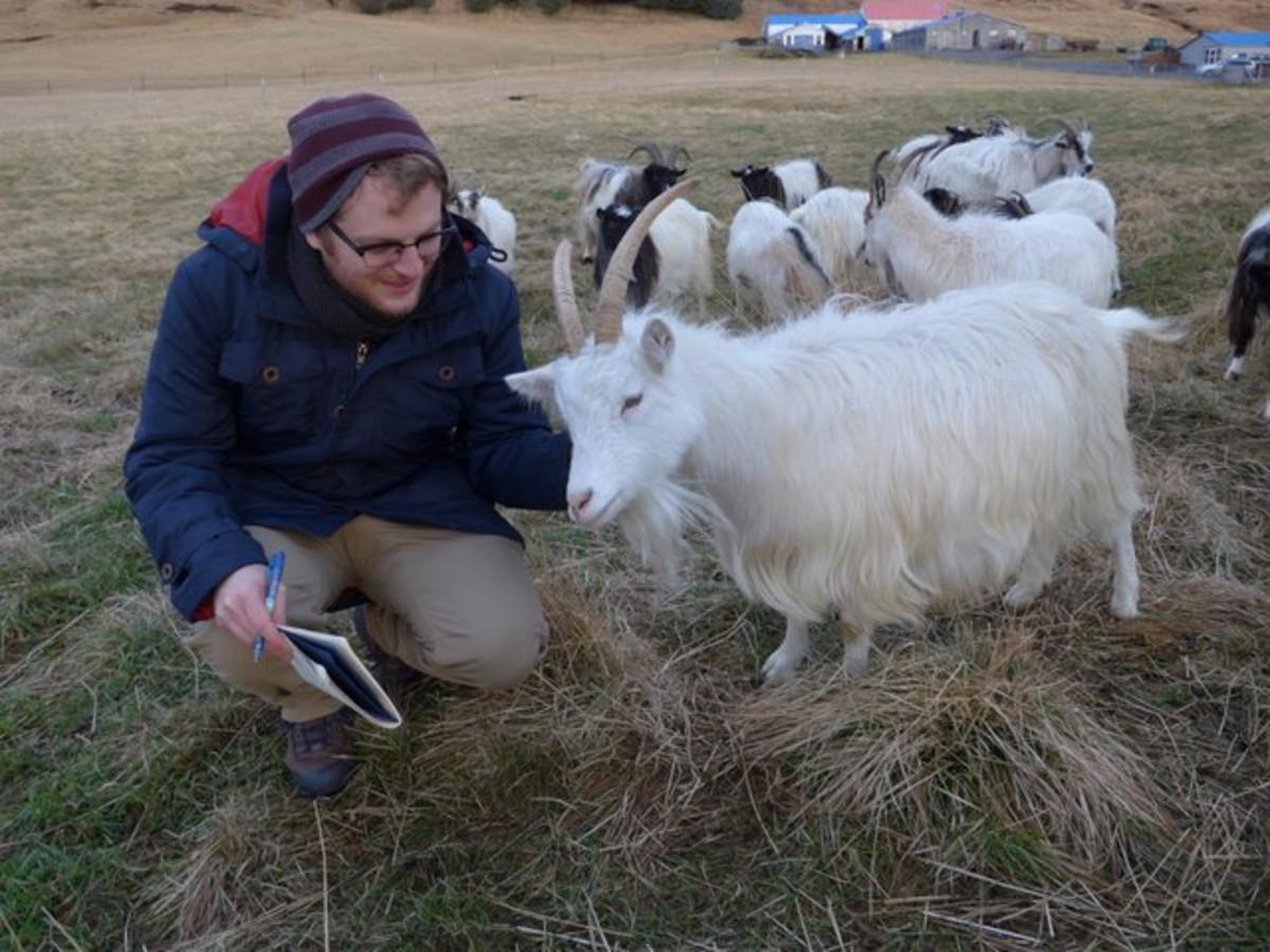 Writer Justin Taylor meets a goat at Haafell. (Photo: Amanda Bullock)