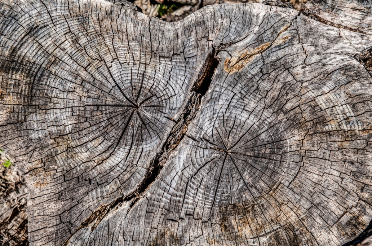 wood rings cracked stock image texture circle of slice photo tree background lumber