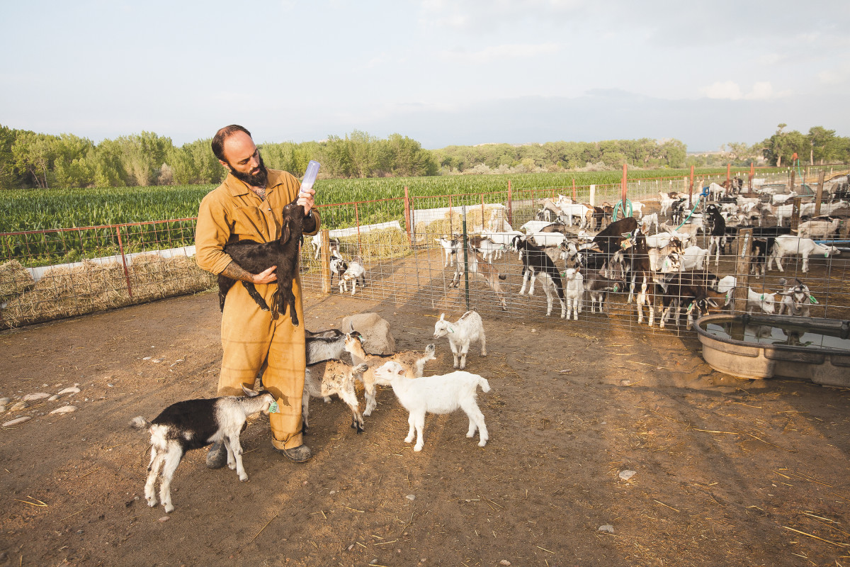 THE FLOCK: Prisoners who work for Colorado Correctional Industries will train your dog, break your horse, and raise goats for your milk and cheese. (Photo: Barry Staver)