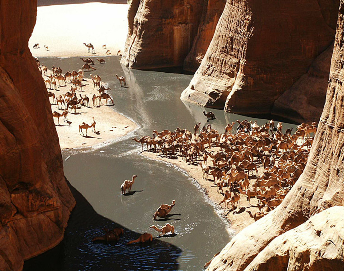 Camels in the Guelta d'Archei in Chad. (Photo: Dario Menasce/Wikimedia Commons)