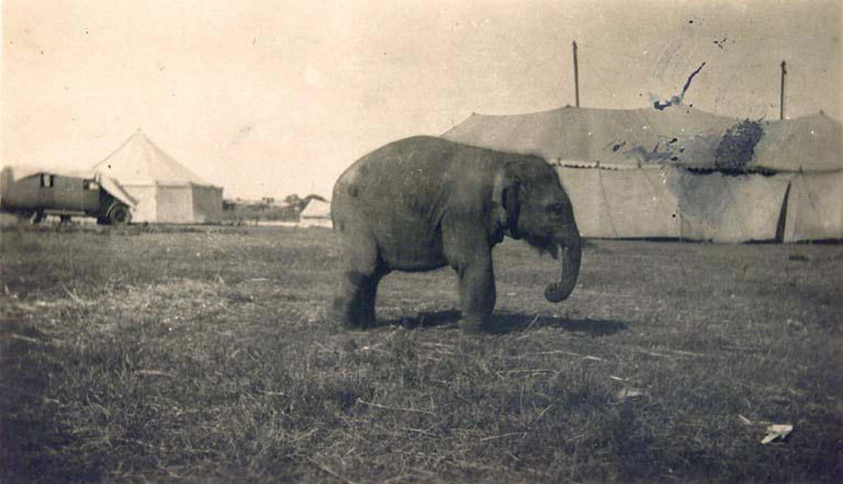 A circus elephant in the 1920s. (Photo: Port Adelaide Enfield Local History Photos/Flickr)