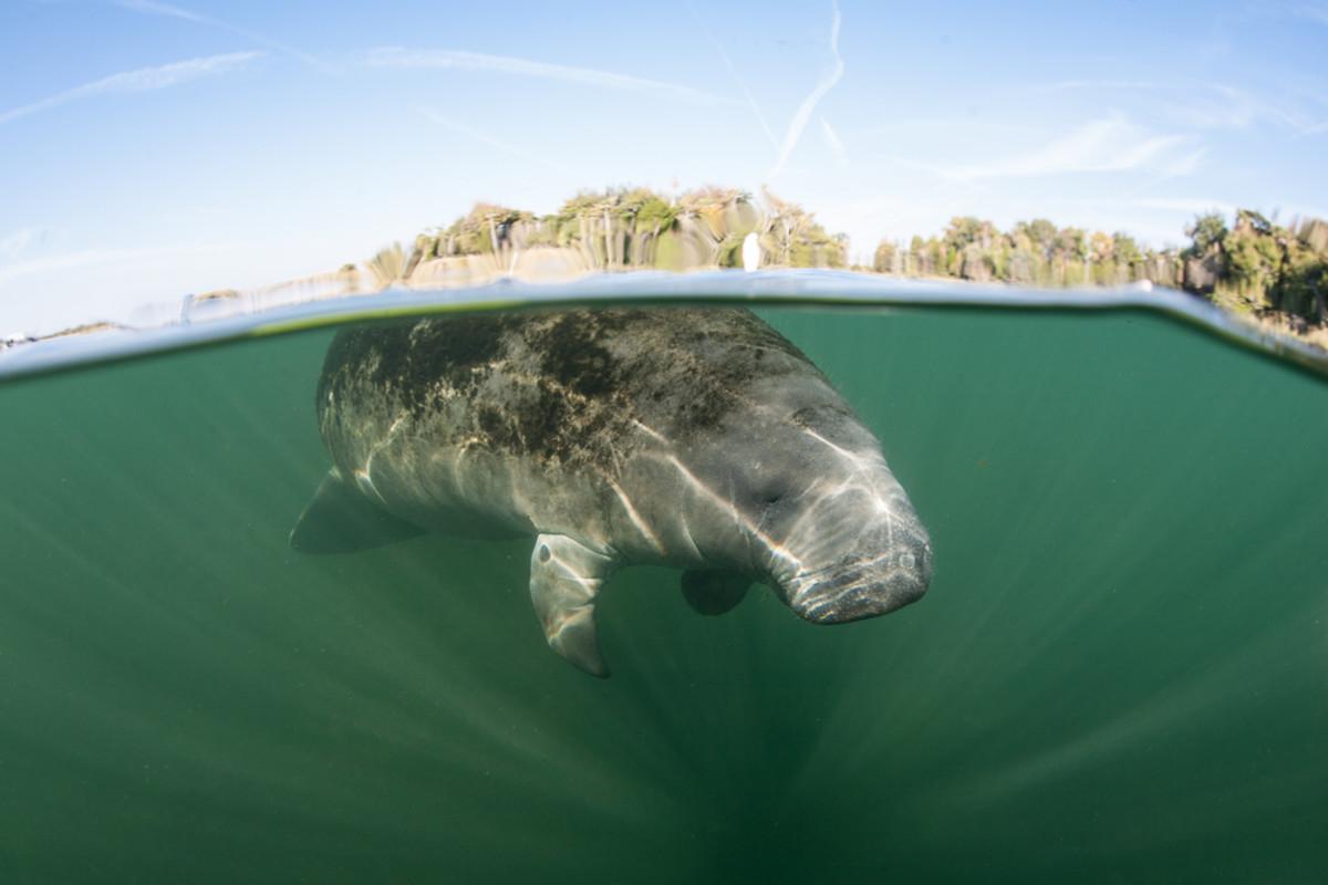 (Photo: Ethan Daniels/Shutterstock)