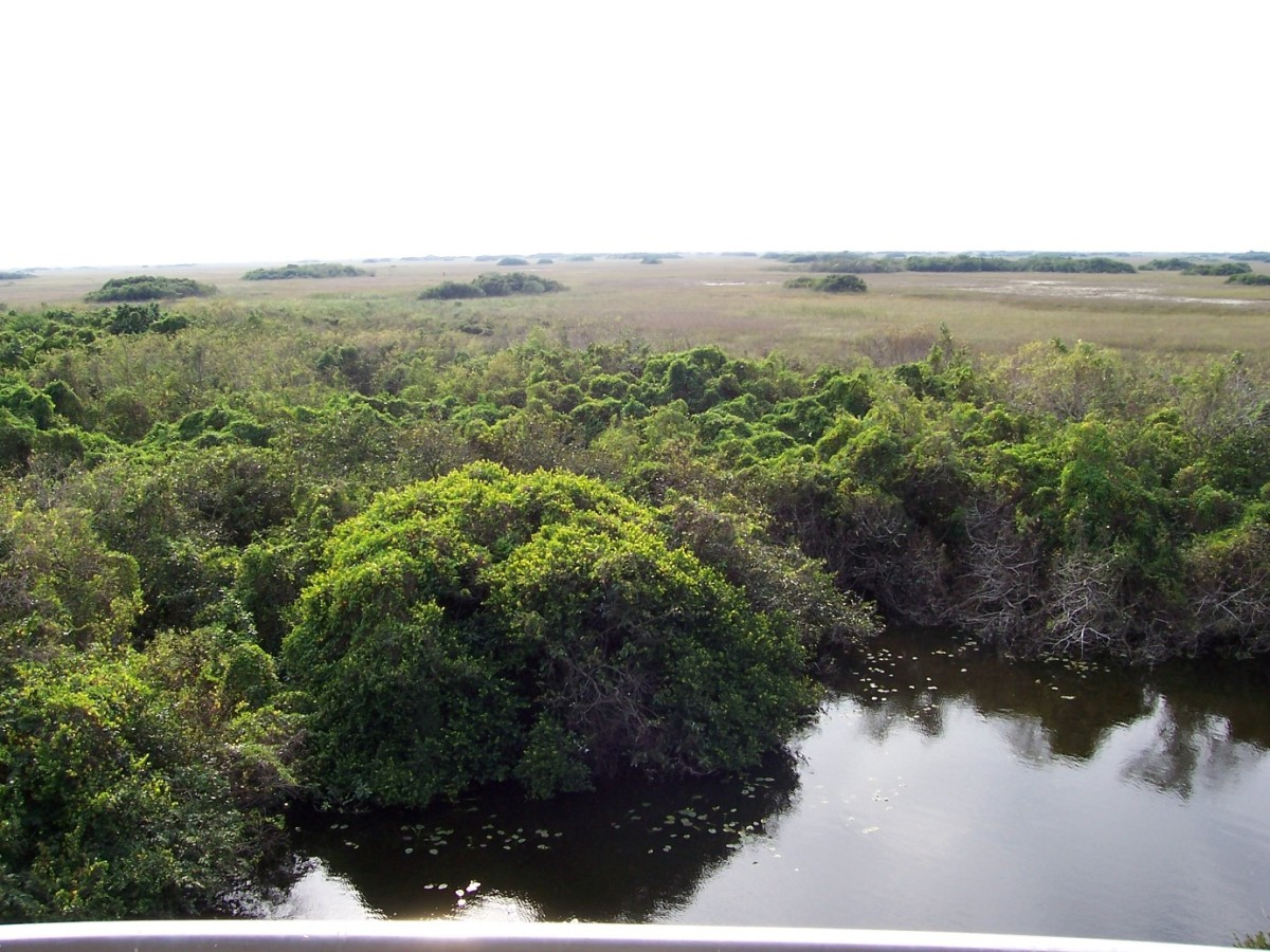Everglades National Park. (Photo: Catholic 85/Wikimedia Commons)