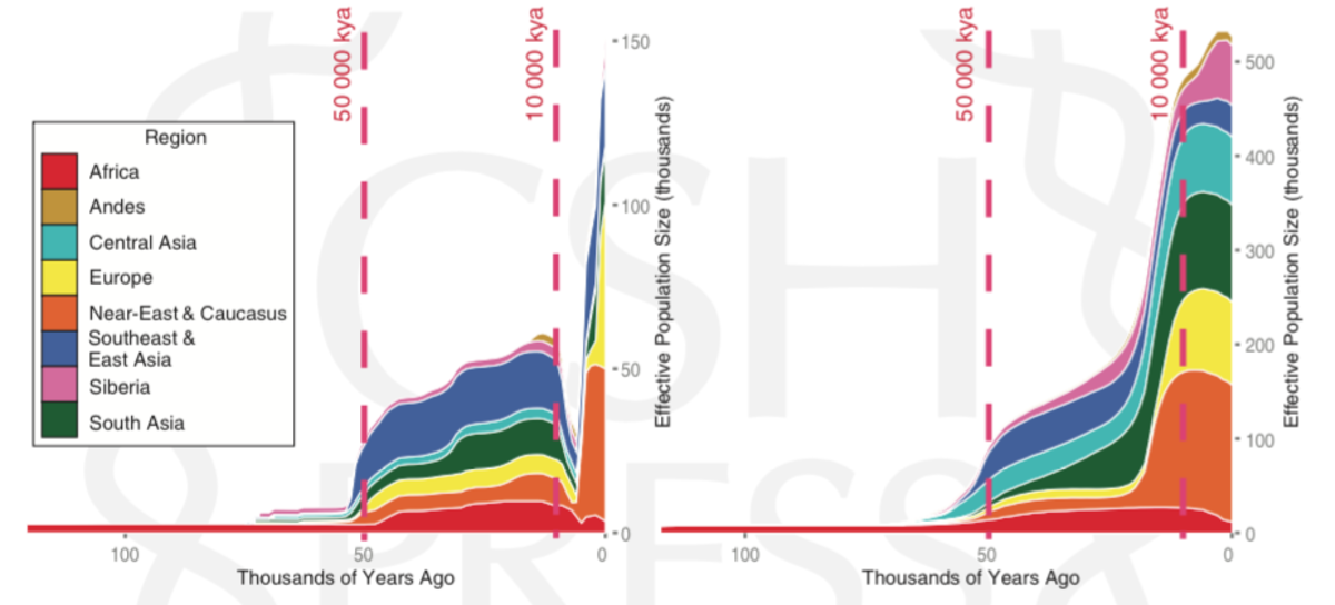These two graphs show the number of men (left) and women (right) who reproduced throughout human history. (Chart: Monika Karmin et al./Genome Research)