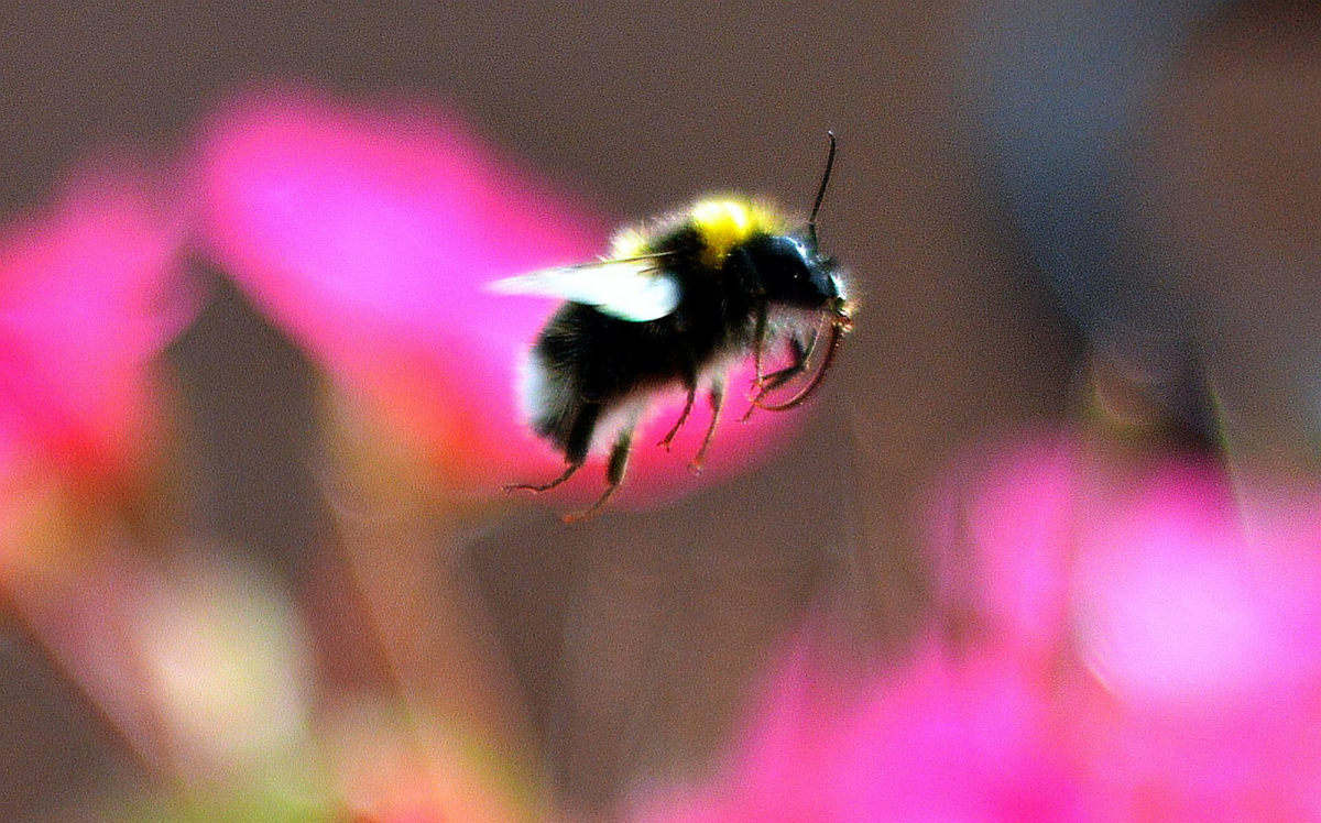 Bees aren't the only ones feeling the effects of neonicotinoids. (Photo: Micolo J/Flickr)