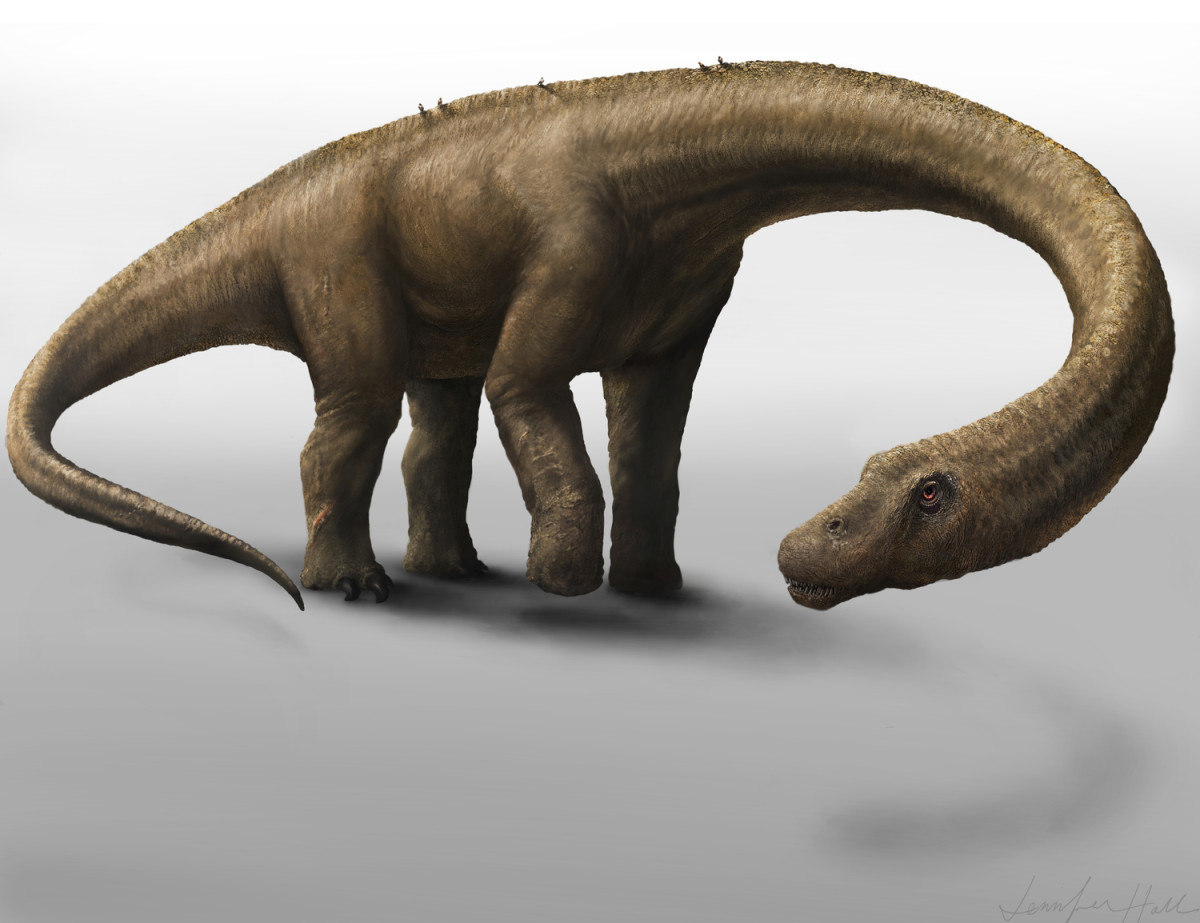 Dreadnoughtus. (Illustration: Jennifer Hall)
