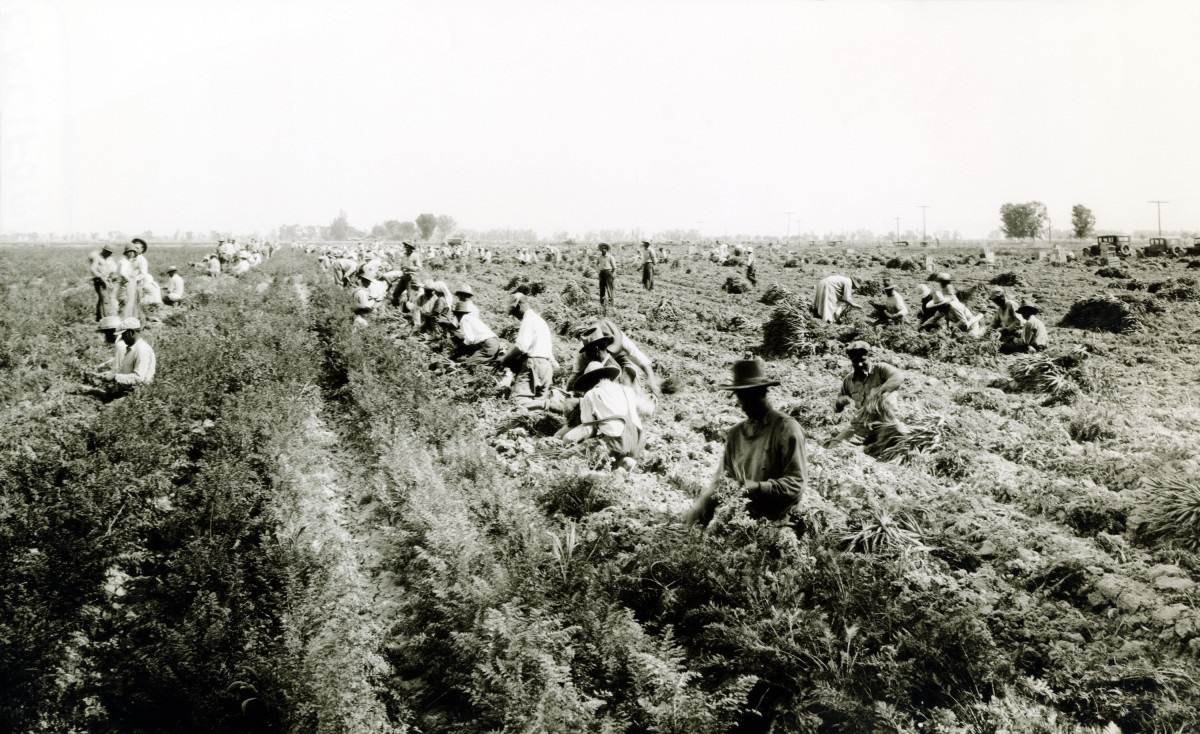 Harvesting carrots in El Centro, California, during the Dust Bowl. (Photo: Everett Historical/Shutterstock)