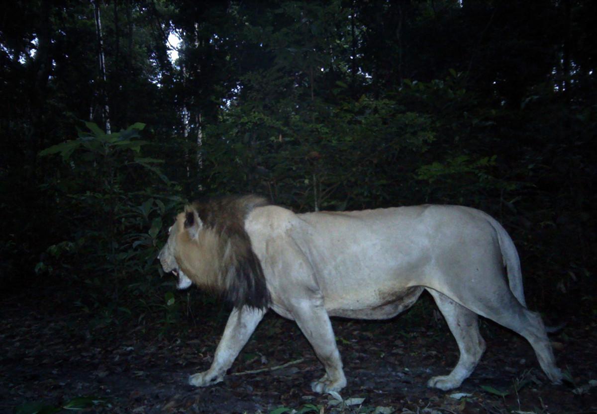 https://psmag.com/.image/t_share/MTI5NDg2NTE4NzI4MzIzMDQy/lion-2jpg.jpg