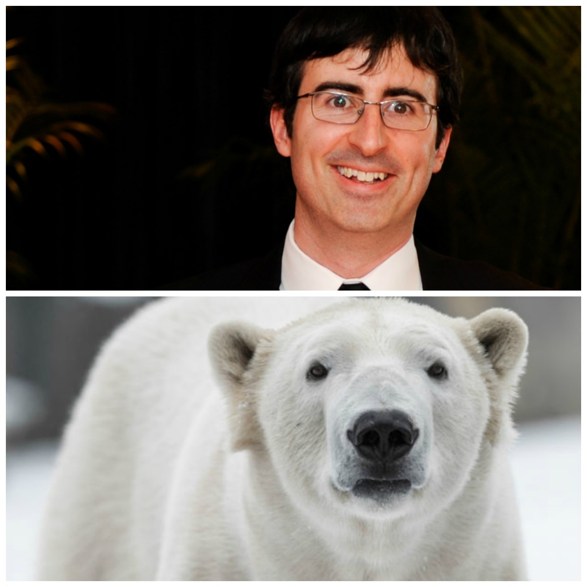 John Oliver's penis report is not going over well with this polar bear. (Photos: Rena Schild/Nagel Photography/Shutterstock/Pacific Standard)
