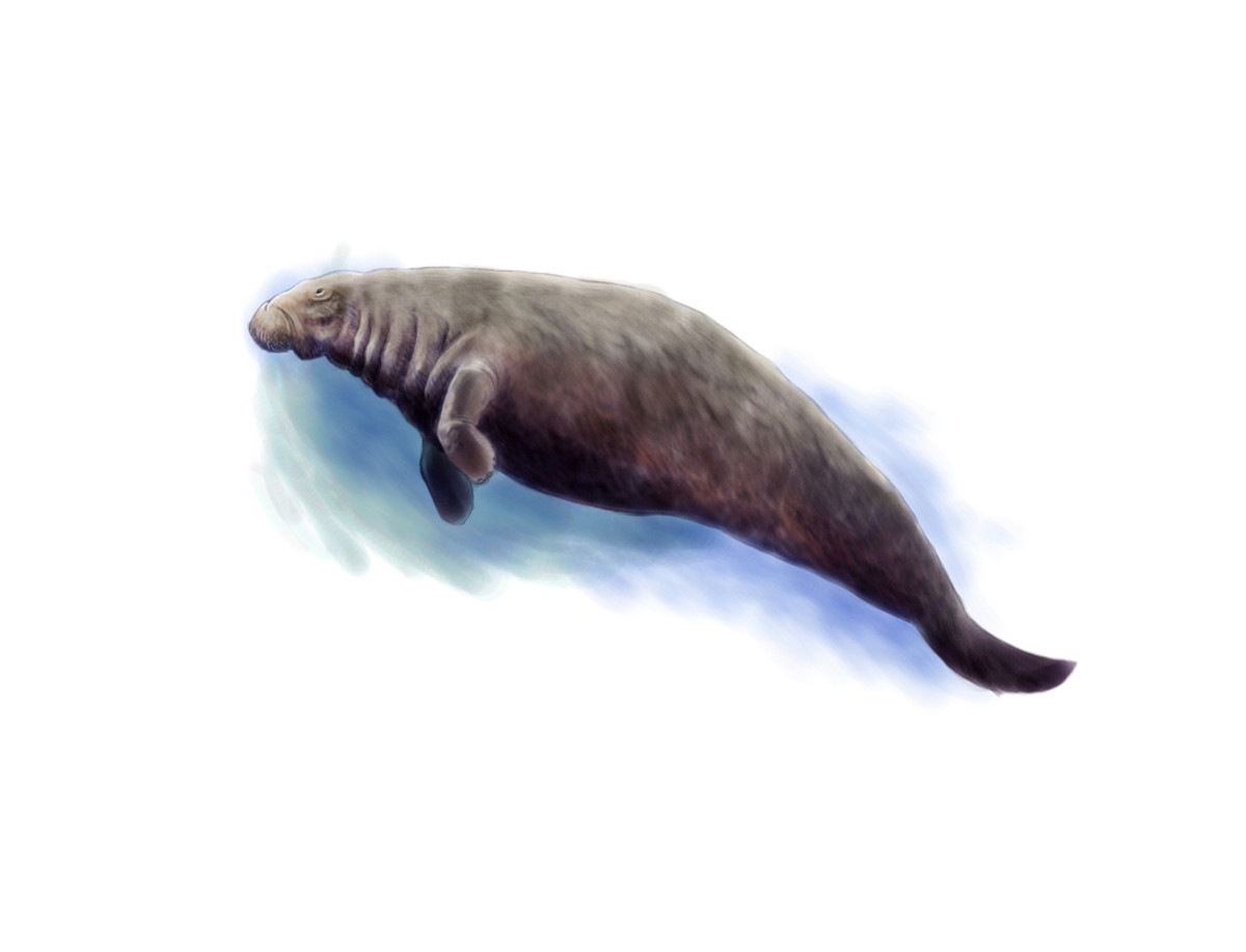 A recreation of a sea cow. (Photo: Nicolas Primola/Shutterstock)