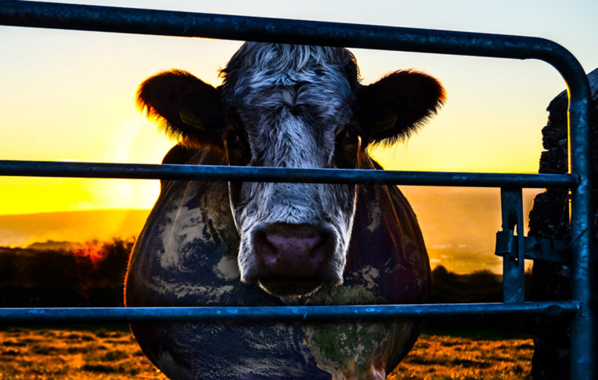 Cowspiracy. (Photo: A.U.M. Films)