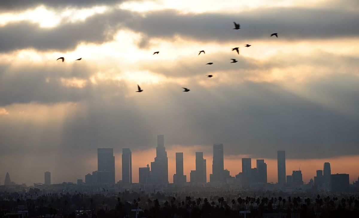 Birds fly across the sky at daybreak over the downtown Los Angeles  skyline on December 14, 2011. (Photo: Frederic J. Brown/AFP/Getty Images)