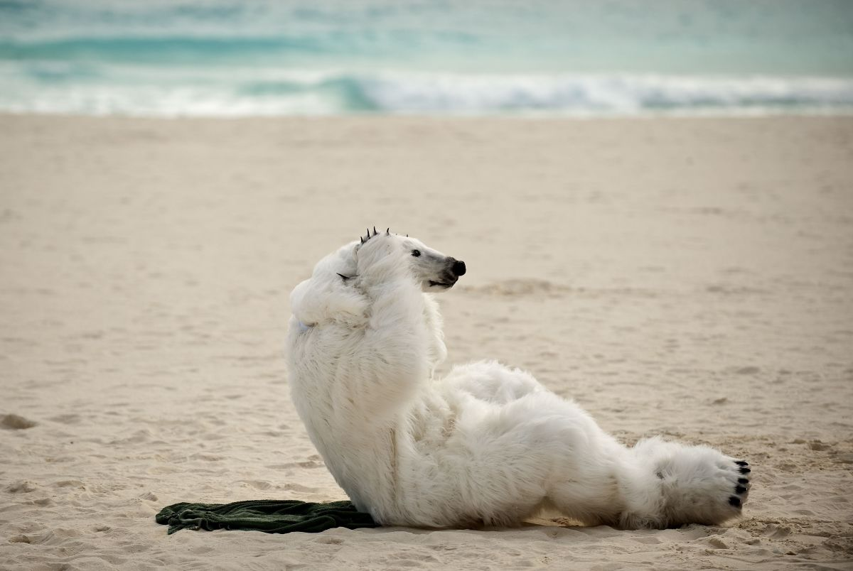 polar bear sierra club cancun