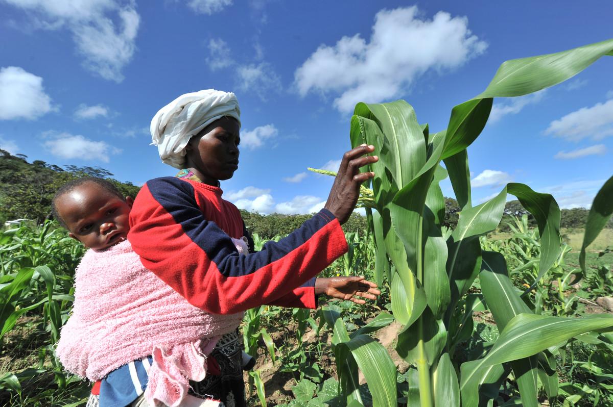 zimbabwe farm climate change