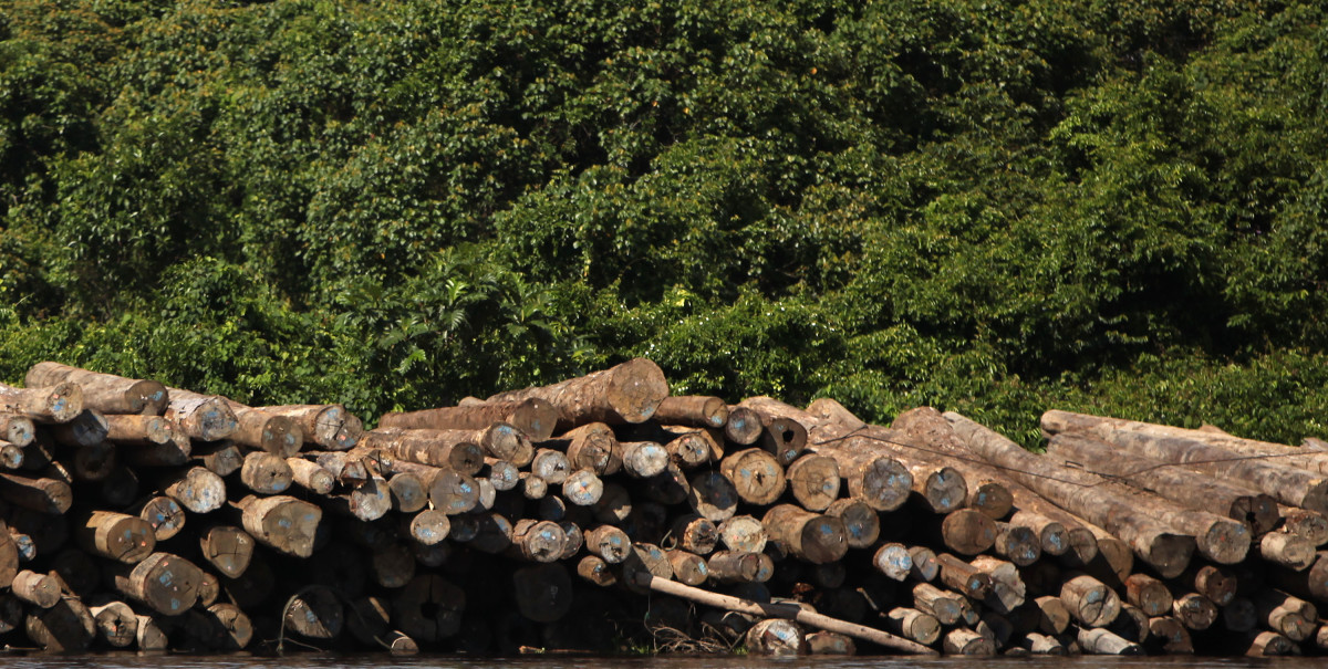 Evidence of logging in Central Kalimantan, Indonesia. (Photo: Department of Foreign Affairs and Trade/Flickr)