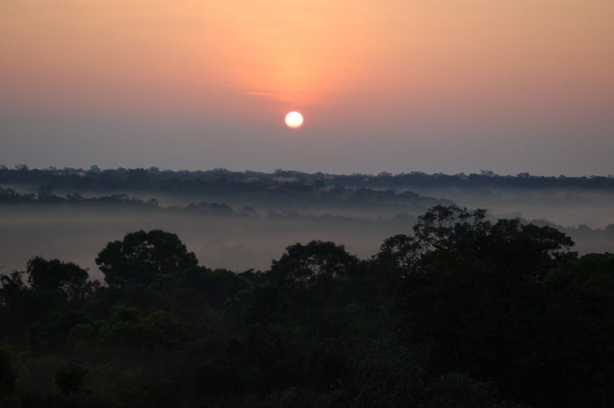 Amazonian tropical rainforest near Manaus, Brazil. (Photo: William Anderegg)
