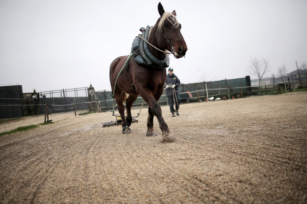 A horse saved from the slaughterhouse.        (Photo: Marco Bertorello/AFP/Getty Images)