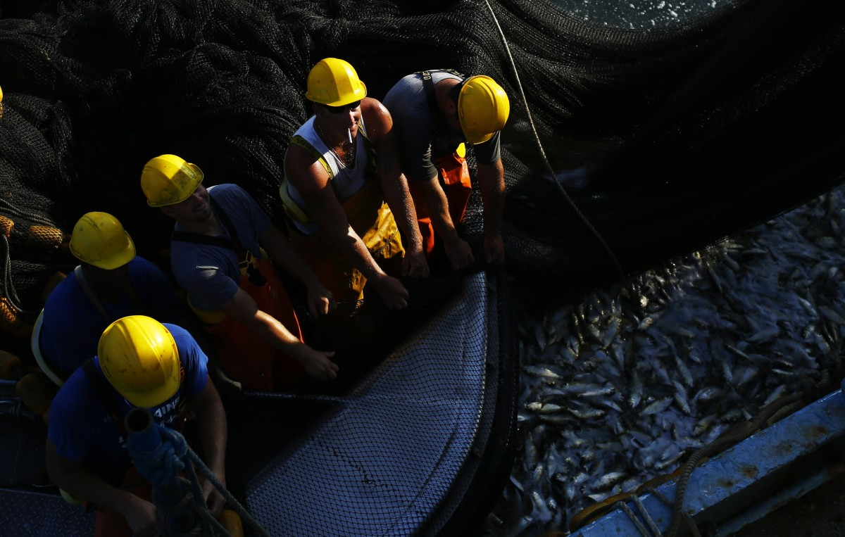 Fishermen pull a net filled with Menhaden fish as they prepare to unload them to the main ship off the coast of Smith Island in Virginia on June 22, 2015. (Photo: Andrew Caballero-Reynolds/AFP/Getty Images)