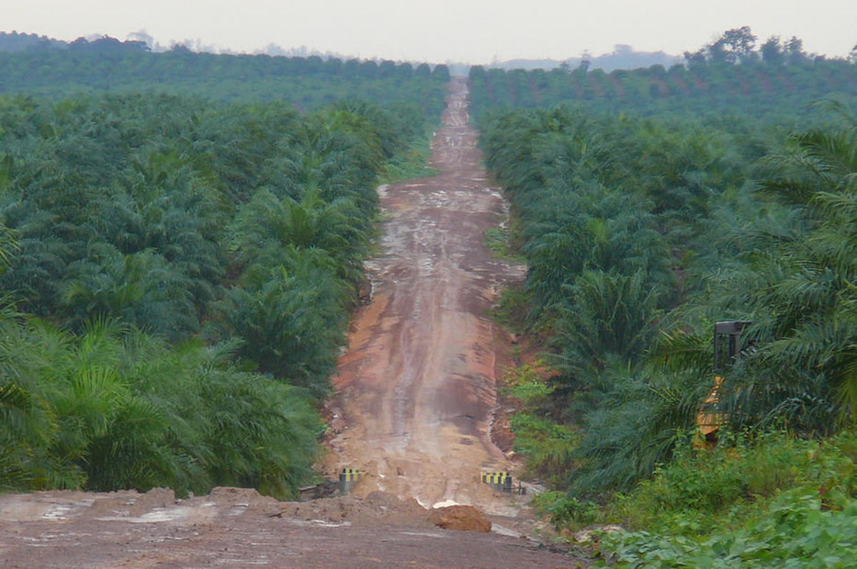 A palm oil plantation in West Kalimantan, Borneo. (Photo: Rainforest Action Network/Flickr)