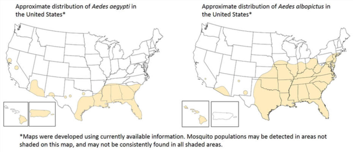 Distribution maps of Aedes aegypti and Aedes albopictus. (Map: CDC)