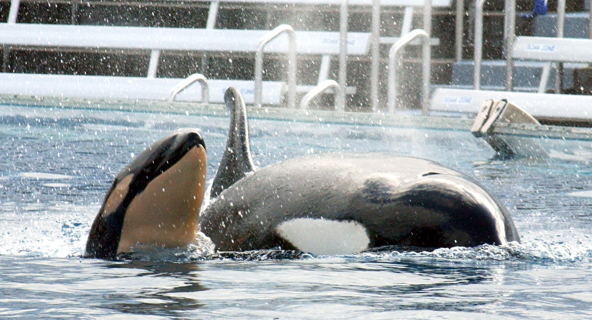 (Photo: SeaWorld/Getty Images)