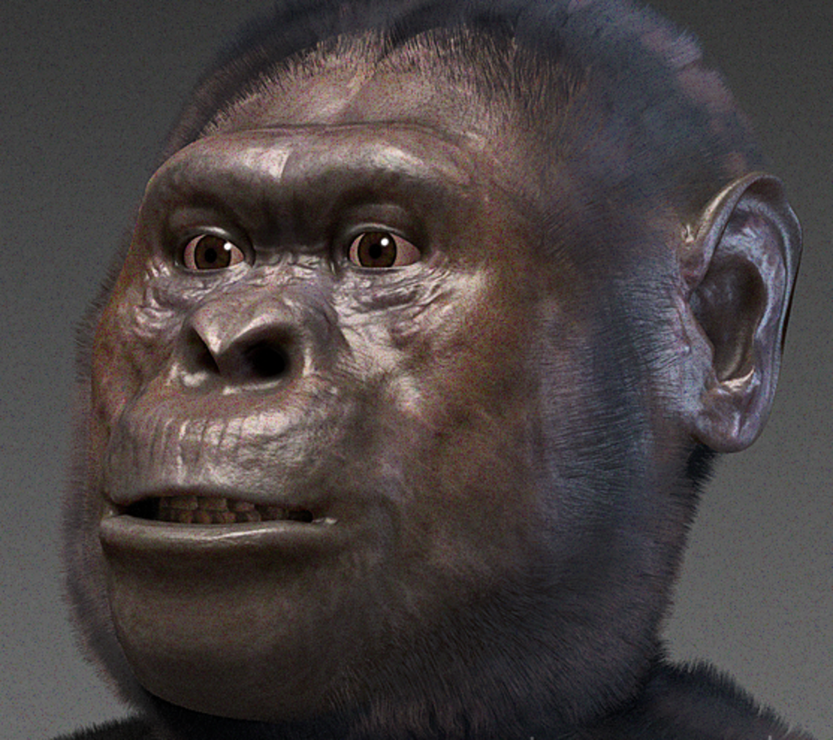 A forensic facial reconstruction of A. afarensis. (Photo: Wikimedia Commons)