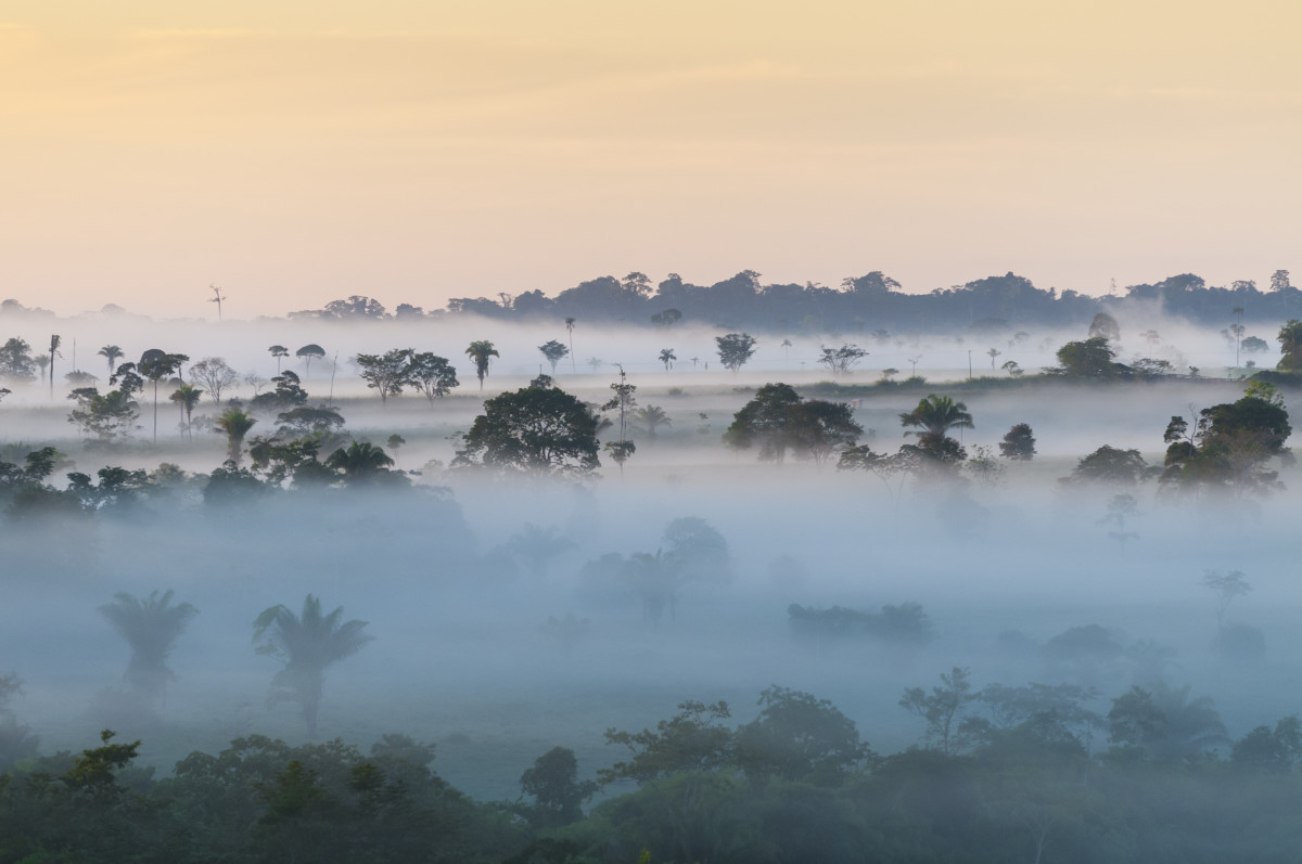 The Amazon rainforest in Brazil. (Photo: Andre Dib/Shutterstock)
