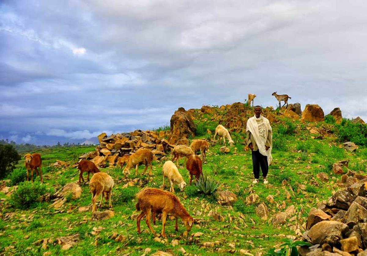 A shepherd in Ethiopia. (Photo: Rod Waddington/Flickr)