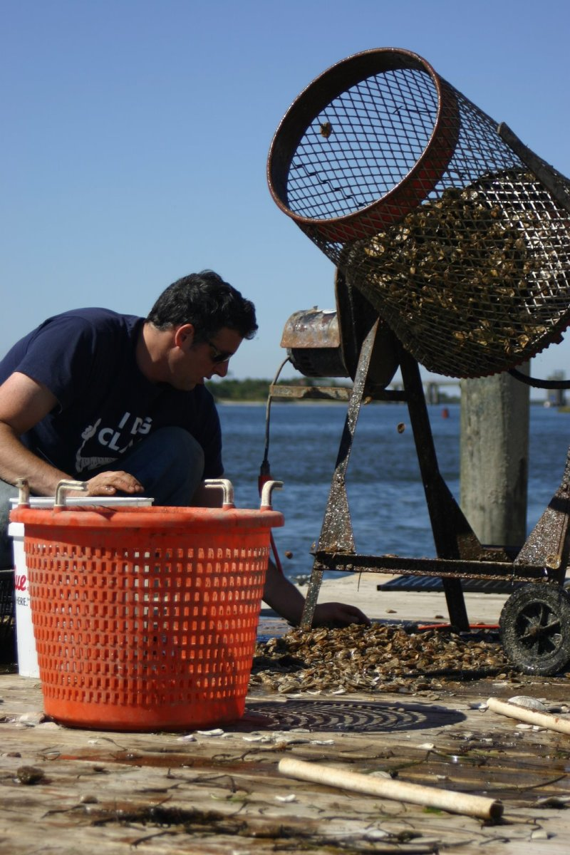 Chris Quartuccio grading baby Blue Island oysters on the Great South Bay. (Photo: Lauren Barton)