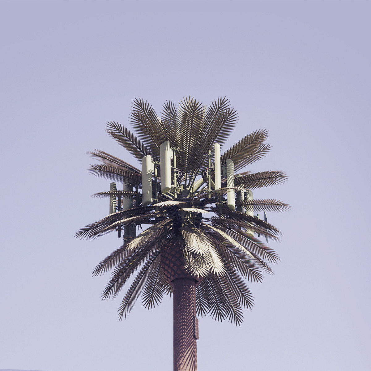 This is totally a palm tree. (Photo: Corey Holms/Flickr)