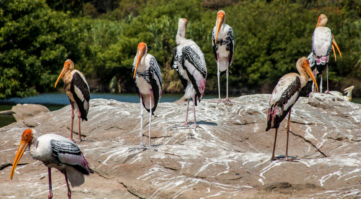 These storks know how to root out a liar. (Photo: Navaneeth KN/Flickr)