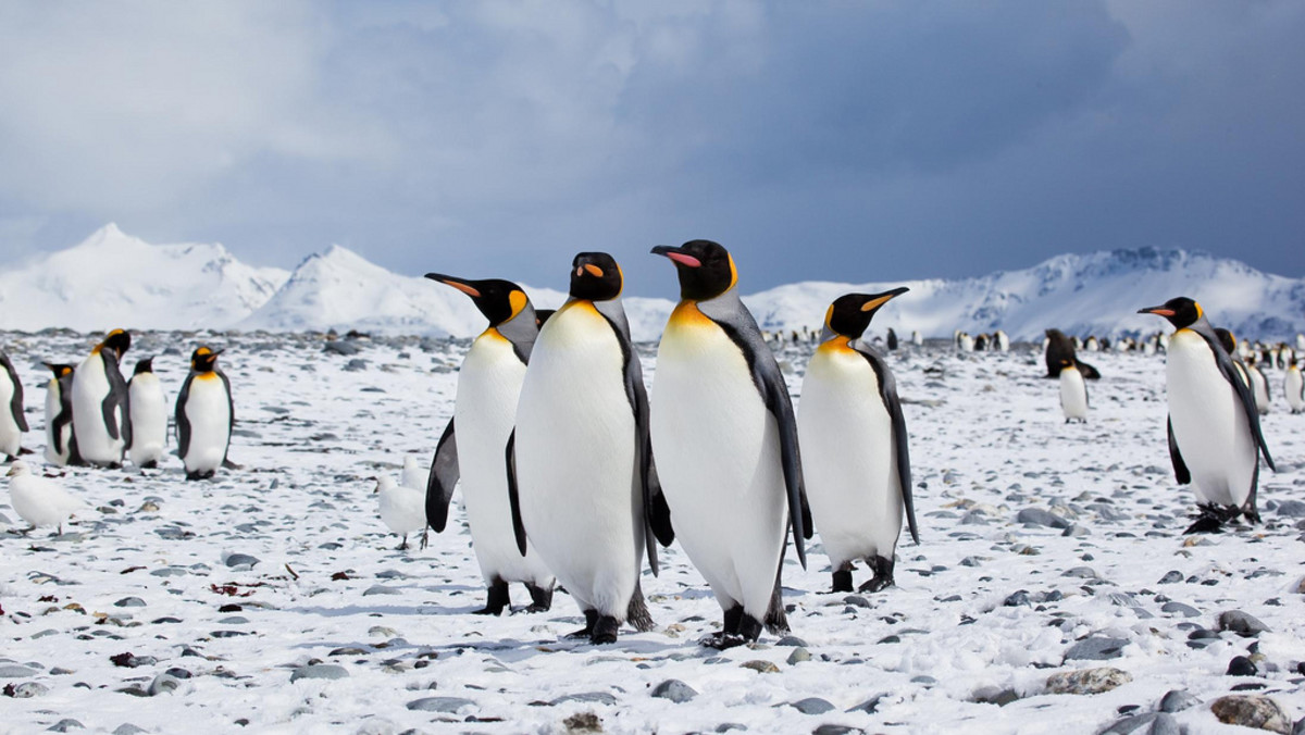 Penguins in the Antarctic. (Photo: Antarctica Bound/Flickr)