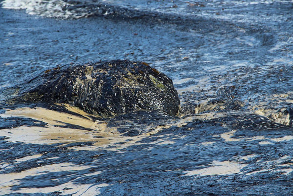 Oil from the Santa Barbara spill. (Photo: Zackmann08/Wikimedia Commons)