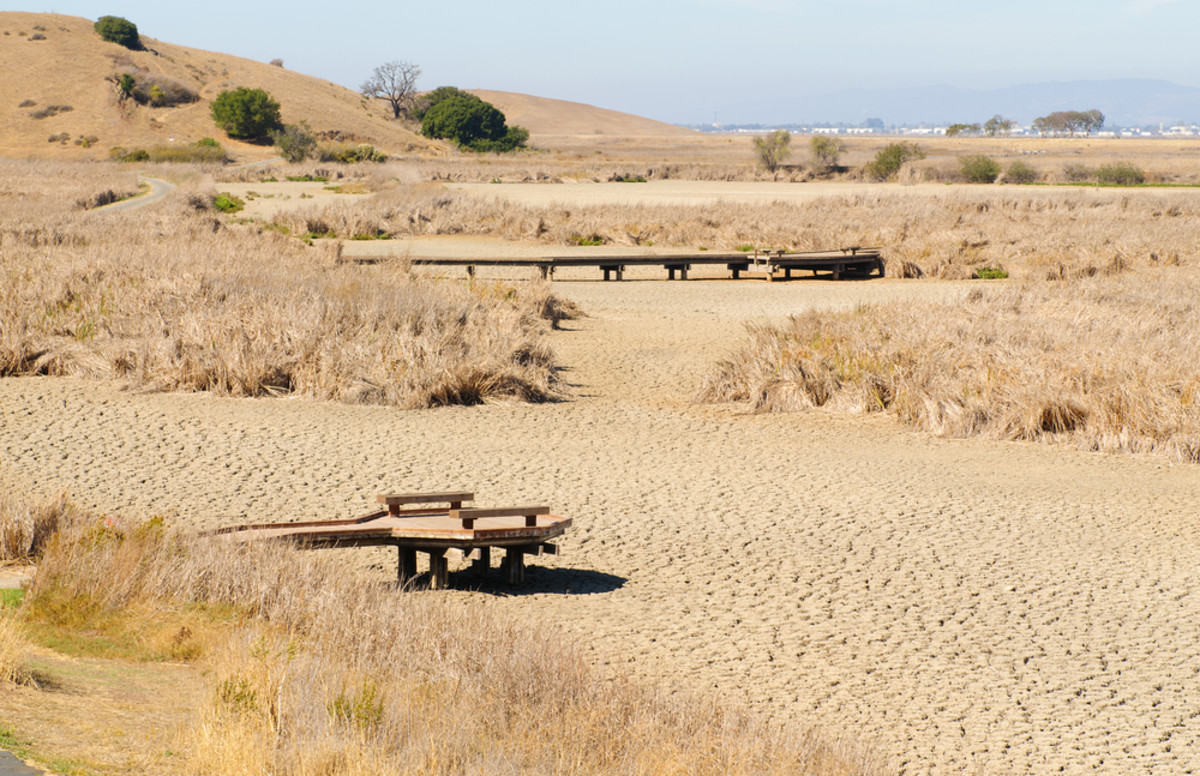 water shortage in california is ruining the California happens to have the highest concentration of organic dairies in the entire country but that could soon change, thanks to a combination of factors mainly driven by the drought.