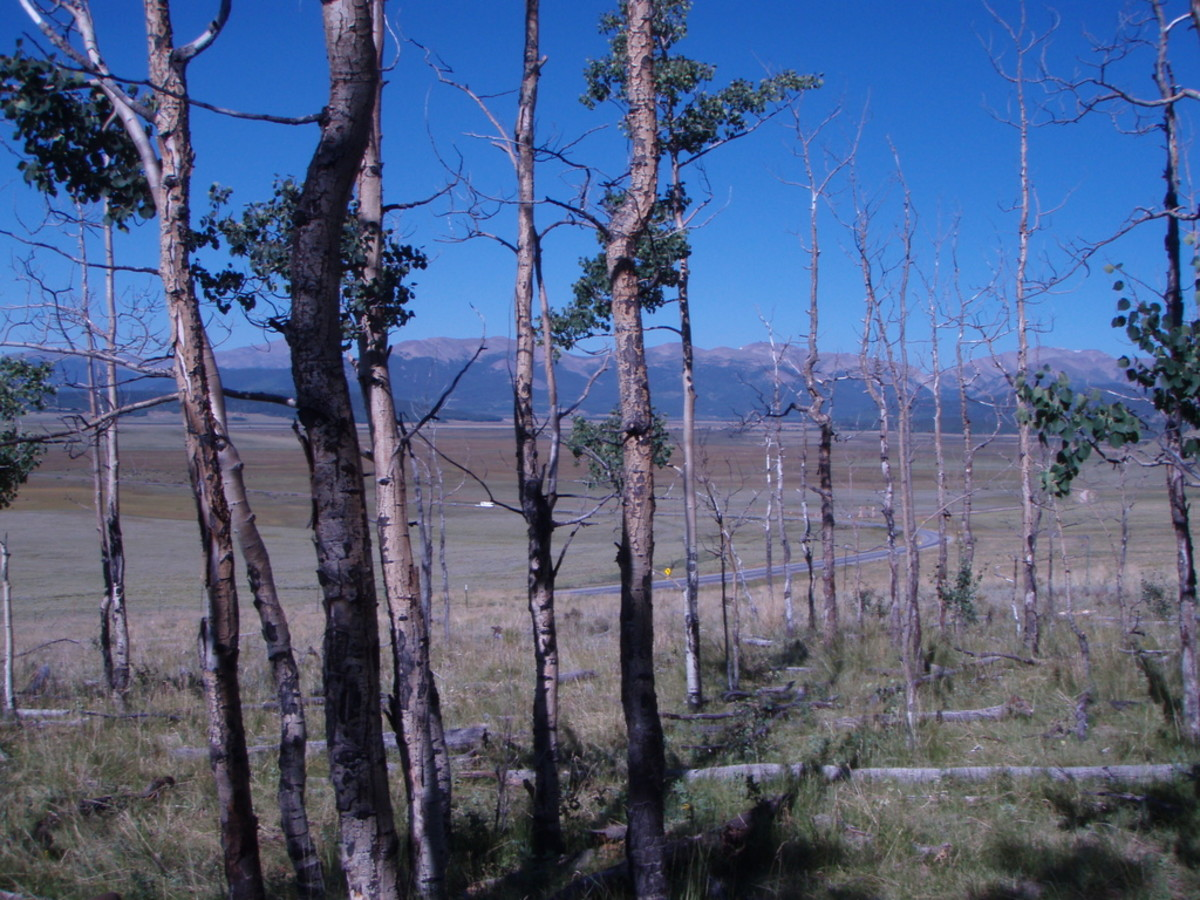 Stressed forests in the southwestern United States. (Photo: Leander Anderegg)