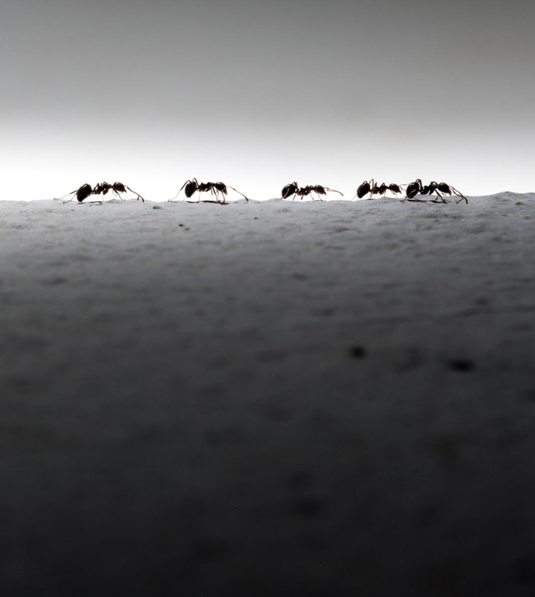 (Photo: Kietisak Yaemklebbua/Shutterstock)